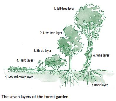 Designing a Forest Garden: The Seven-Layer Garden