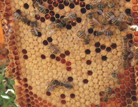 The Buzz: Beekeeping for Beginners