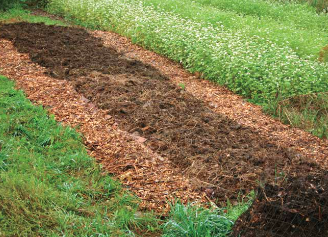 Permaculture Q&A: Mulching Options for Your Garden
