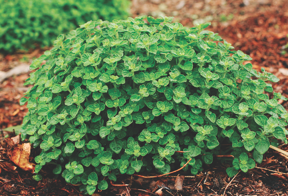 Growing Your Own Herbs in 6 Easy Steps