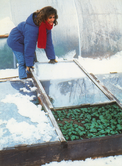 Gardening Tips from Eliot Coleman: How to Start Seedlings in a Cold Frame