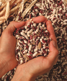 The Seed Series: Choosing the Right Seed Crop