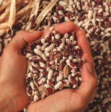Choosing the Right Seed Crop