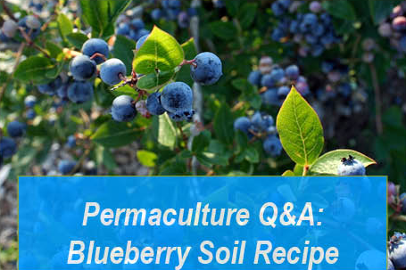 Permaculture Q&A: Michael Judd's Blueberry Soil Mix