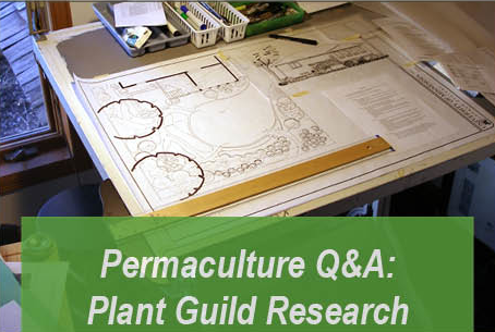 Permaculture Q&A: Plant Guild Research and Development
