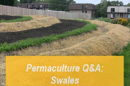 Permaculture Q&A: Are Swales Right For You?