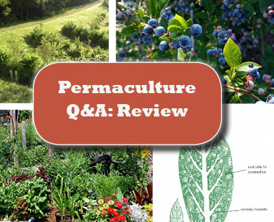 Permaculture Q&A: Month in Review
