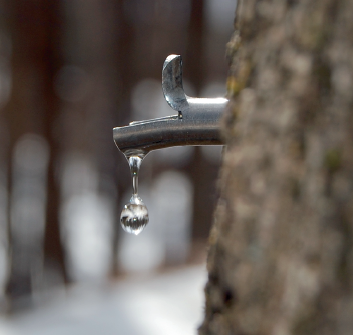 Get Ready for Maple Sugaring Season