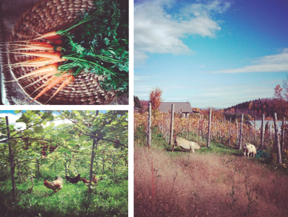 Capturing Landscape in a Wine: The Unlikely Vineyard