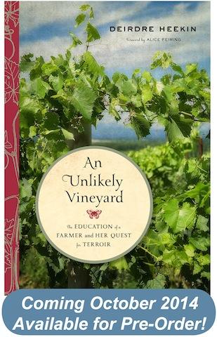 An Unlikely Vineyard