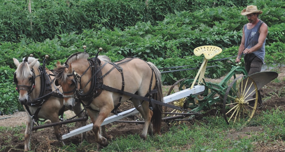 <i>The New Horse-Powered Farm</i> Featured in <i>The New York Times</i>