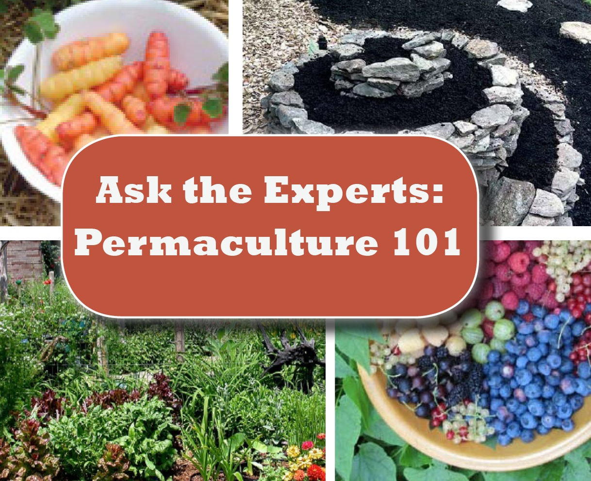 Permaculture 101: Ask the Experts