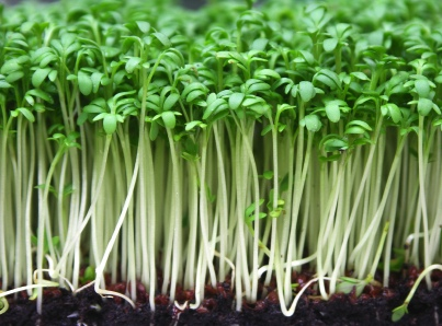 The Benefits of Perennial Vegetables