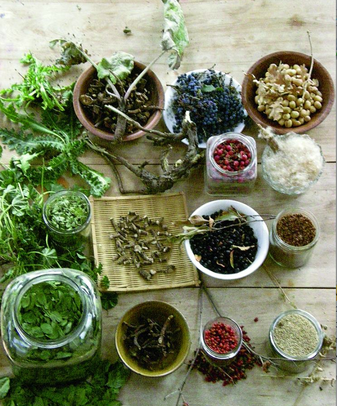 Wild Edibles: 5 Tips for Beginner Foragers