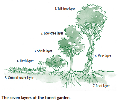 seven layer forest garden