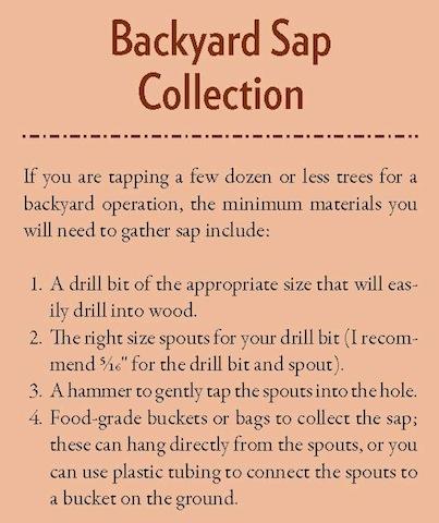 Backyard Sap Collection