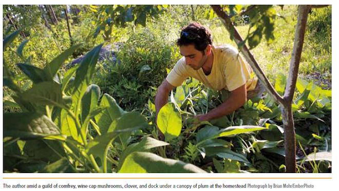 Resilient Farm and Homestead Falk
