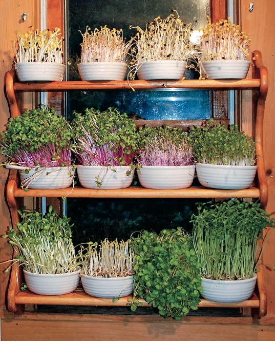 Unlock the Secret to the Perfect Salad with Soil Sprouts Chelsea