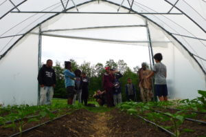 people in greenhouse