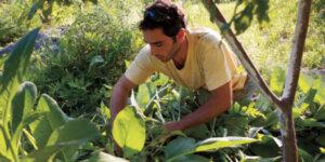 ben falk gardening