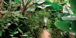 path through plants