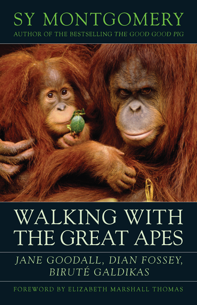 The Walking with the Great Apes cover