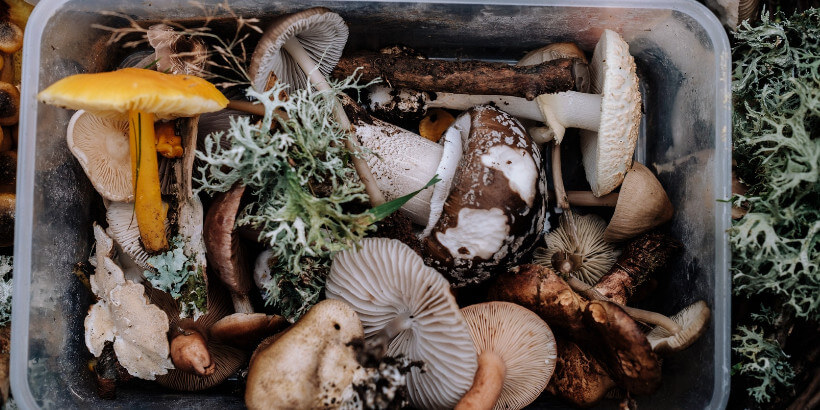 bucket of mushrooms