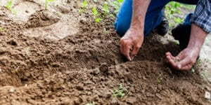 Man sowing seeds in dirt