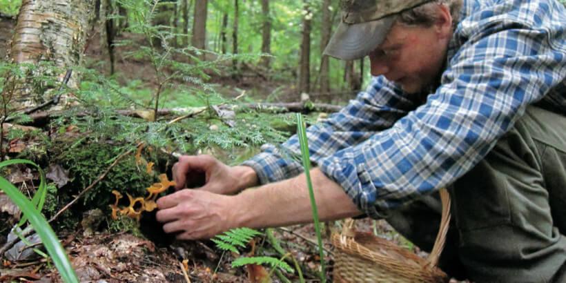 man foraging