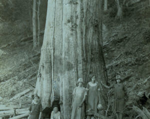 The Shelton family in Tennessee pose in front of a blight-killed American chestnut (1920). Photo courtesy of the Great Smoky Mountains National Park Library