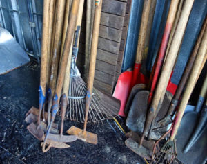 Shed filled with shovels, rakes, and hoes