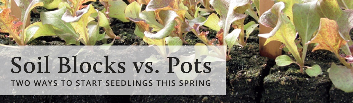 Soil Blocks vs. Pots: Two Ways to Start Seedlings This Spring