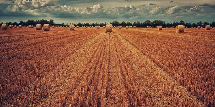 farmland with hay