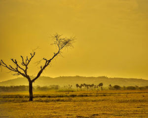 bare tree in dry landscape