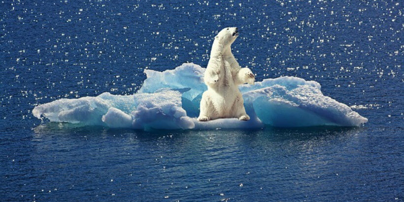 polar bear on ice in water