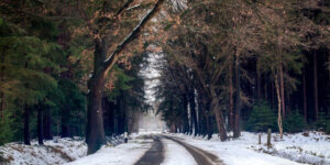 winter road through trees