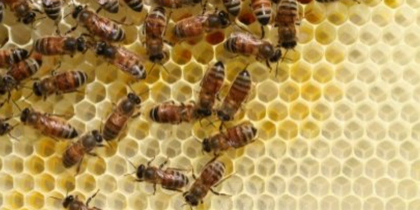 Urban Apiculture: Raise Bees in Your Apartment | Chelsea