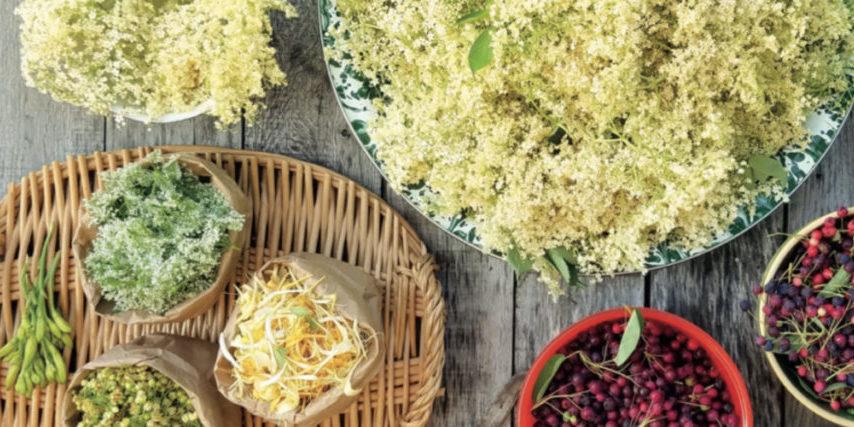 elderberry-elderflower