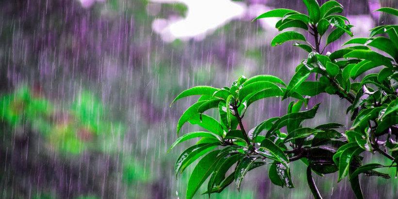 8 Principles For Successful Rainwater Harvesting