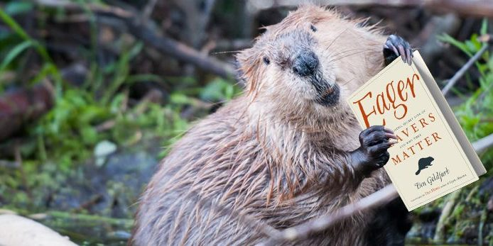 beaver with eager book