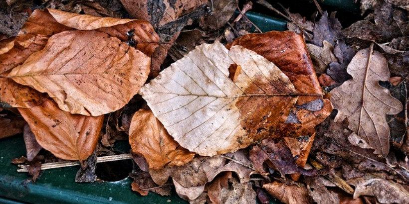 fall leaves banner