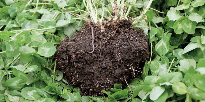 soil banner_DirtToSoil