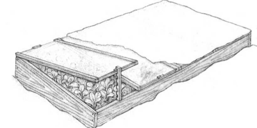 cold frame with plants covered in snow