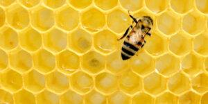 bee on honey comb
