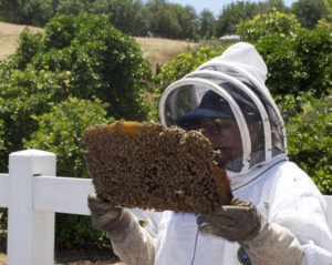 person holding part of hive