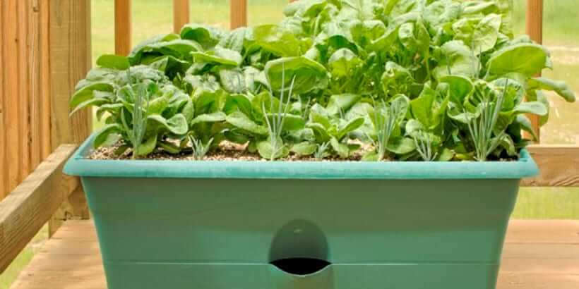 plants growing in planter