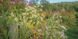 goldenrod, joe-pye weed, and jewelweed