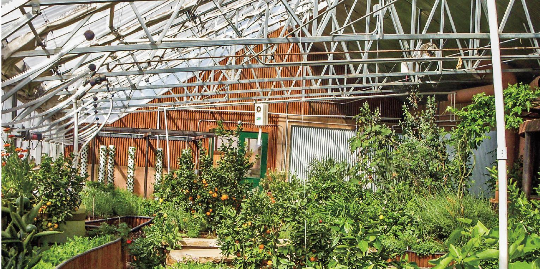 common greenhouse plants