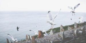 seagulls on a stone wall
