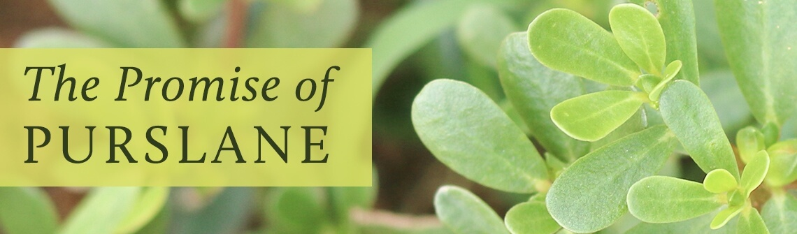 The Promise of Purslane
